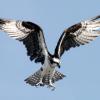 Chancenlos: Goslarer Adler